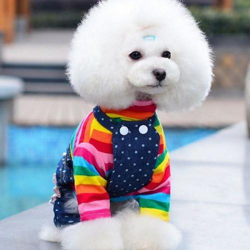 2018 spring petco pet clothes dog clothes denim polka dot laciness pet bib  pants NVNWUHZ