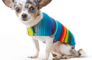 amazon.com : dog clothes - handmade dog poncho from authentic mexican  blanket by baja DXRZRFR
