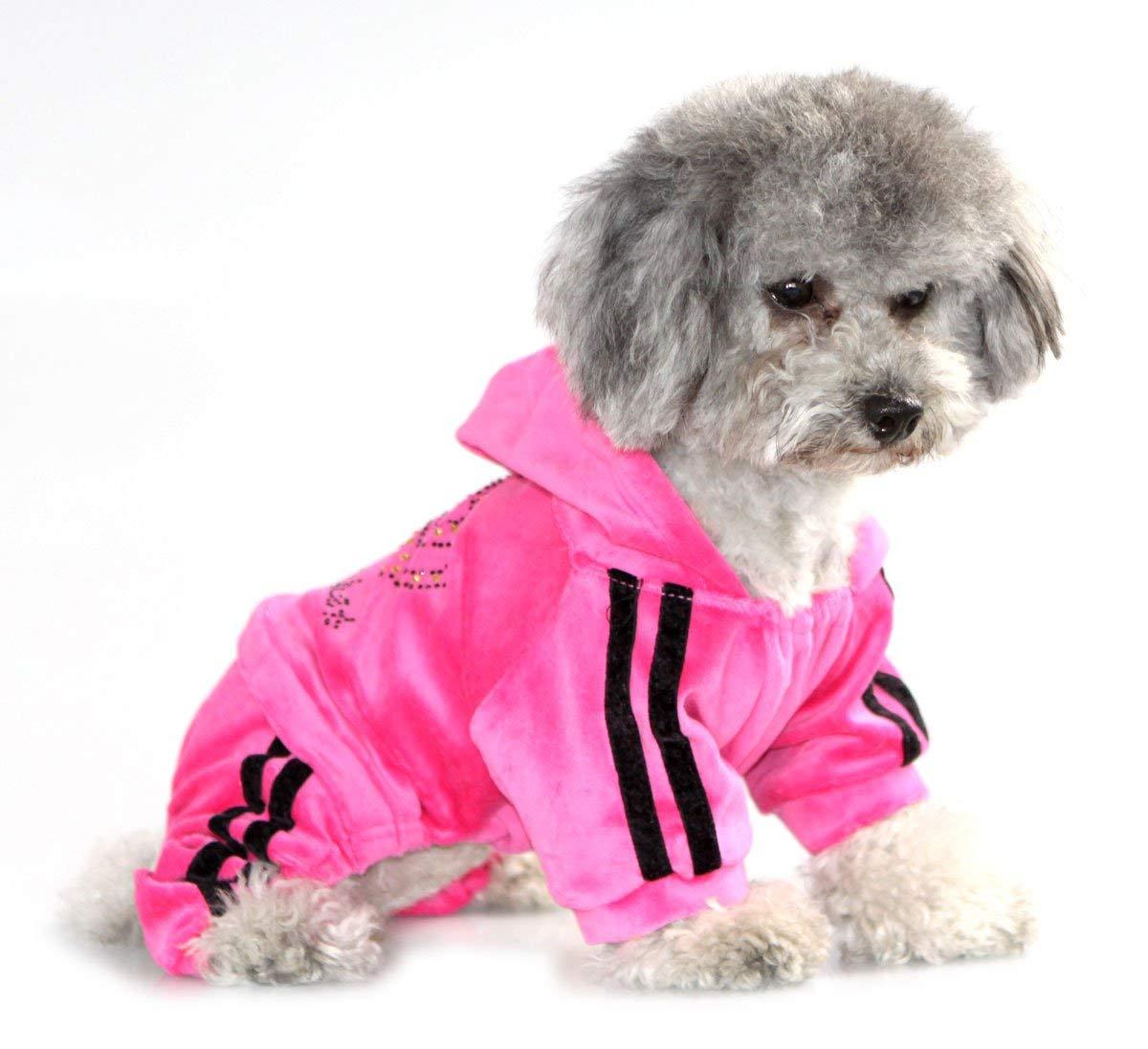 dog clothes amazon.com : pegasus pet clothes for puppy cat small dog soft velvet crown  jumpsuit RMIXIAF