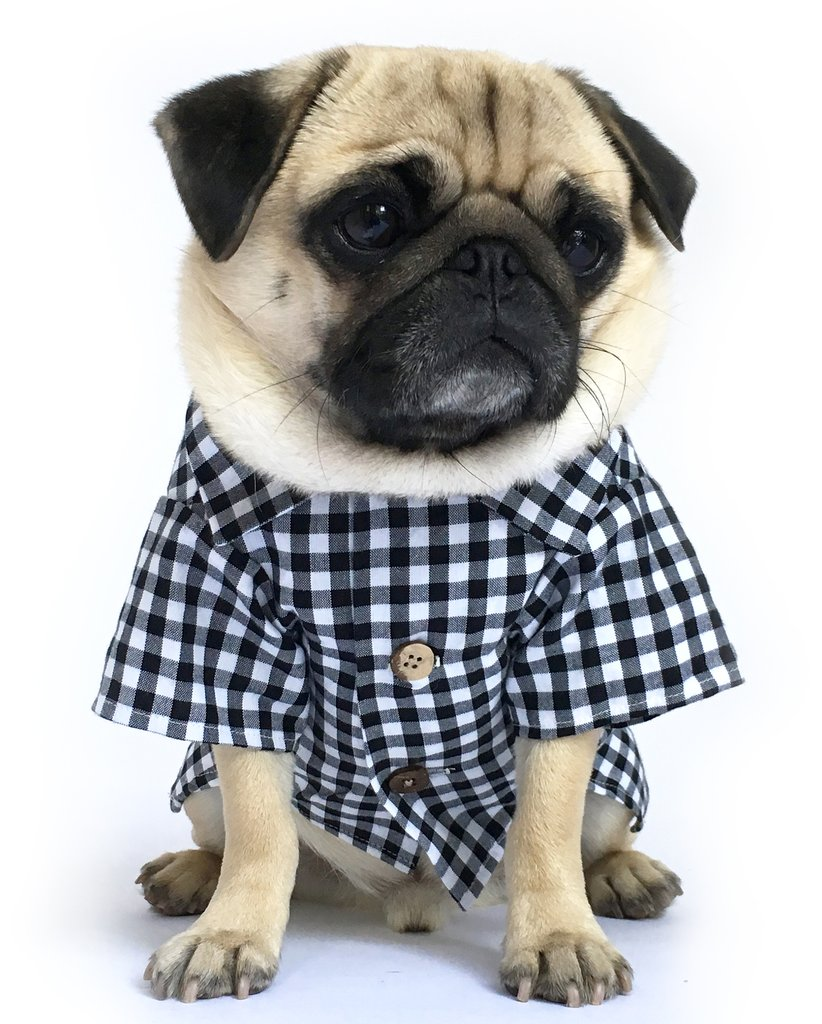 dog clothes ... cute dog clothing and dog fashion for modern stylish dogs by dog  threads JKRBXLL